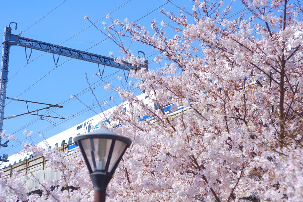 新幹線とさくら