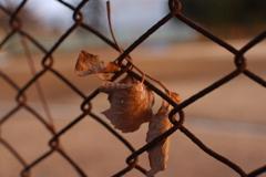 枯れ葉と金網