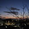 枯れ木と街明かり