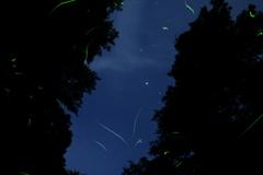 星とホタル