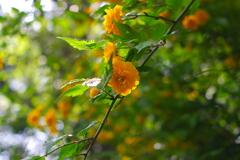 透けるオレンジ