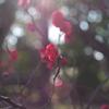 冬の日差しと紅梅