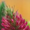 赤い花と白いひげ