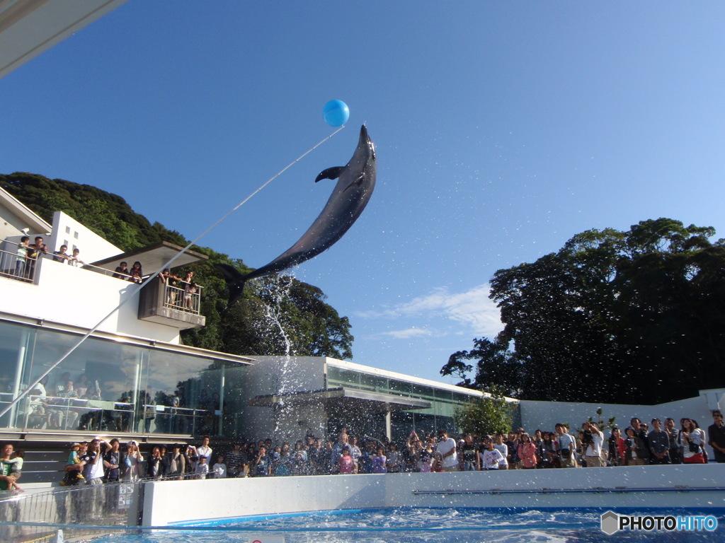 長崎 海きらら水族館での決定的瞬間