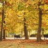 色づくプラタナス並木