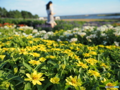 海を臨むお花畑で