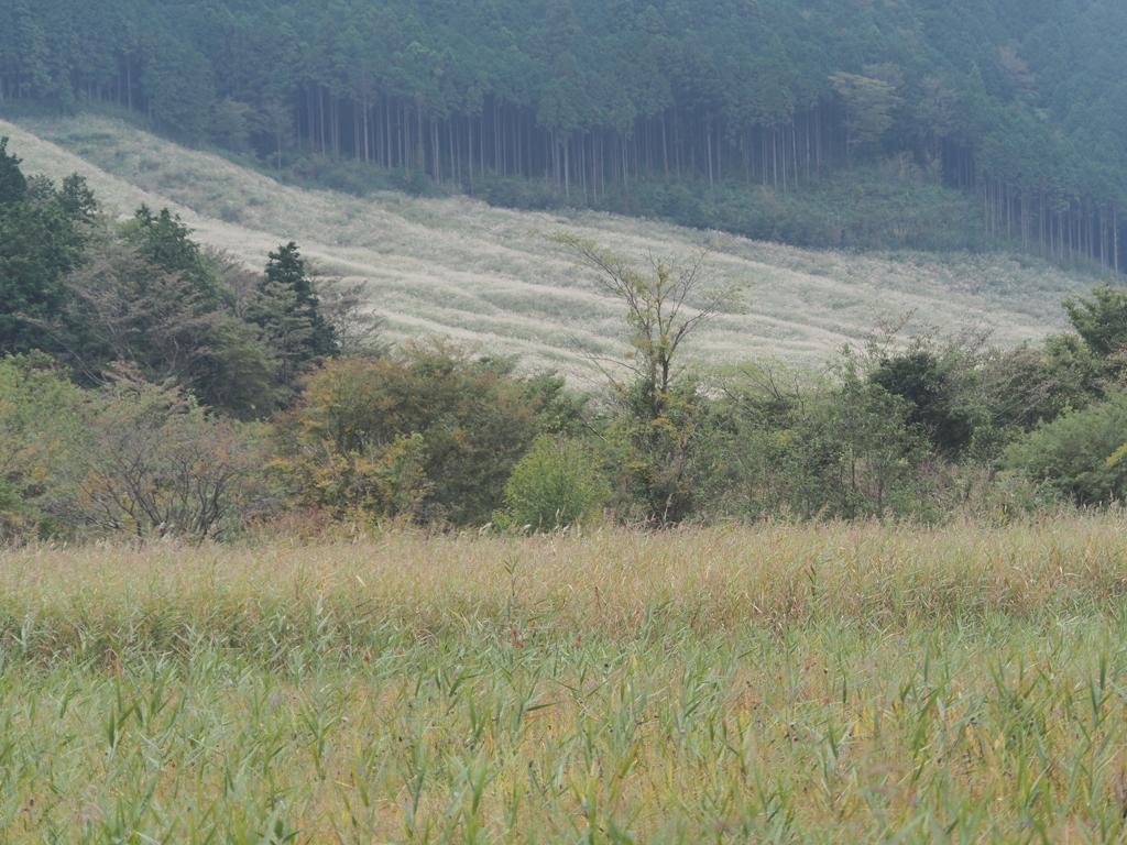 箱根仙石原の生き物