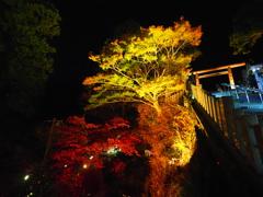 大山阿夫利神社ライトアップ