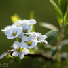 white-a