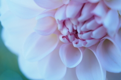 花:マクロ