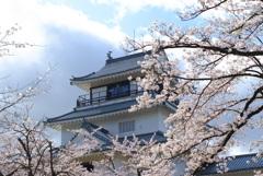 桜:お城(資料館)
