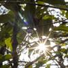 太陽を綺麗に撮る練習_01