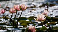 LotusⅠ