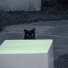 沖縄野寒 ~Stray cat~