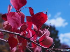 紅葉と秋空