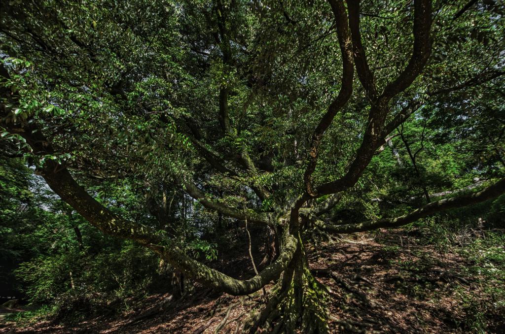 魔女の木(触手)