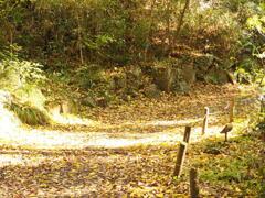 サクサク秋の山道