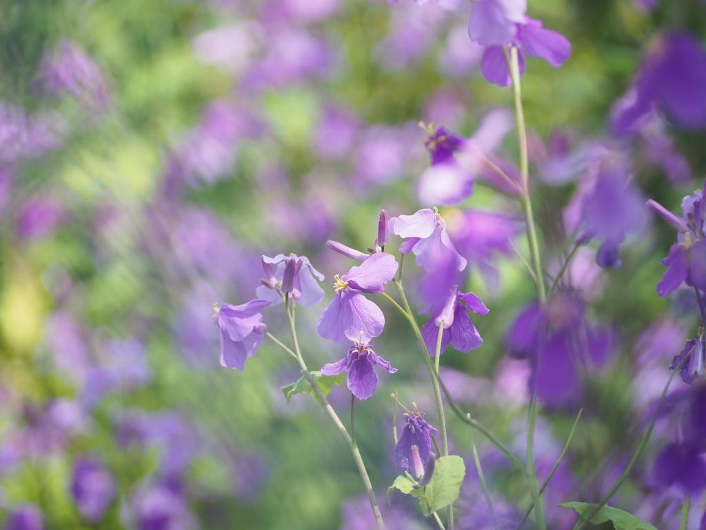 春色の草原