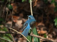 久々の暖かさに青い鳥Ⅱ