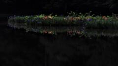 平池の初夏の水辺 5