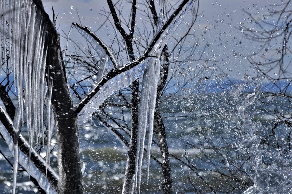 湖辺の氷柱 5