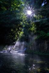 渓流芹川の朝