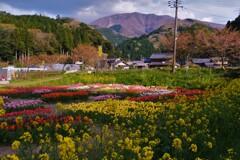 山里のチューリップ畑 2-2