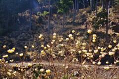 春薫妖精の森 1