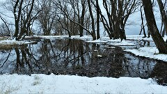 小さな森の水辺の冬物語 1