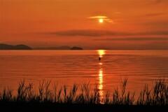 湖辺の朝釣り 4