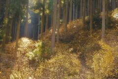 春薫妖精の森 7