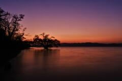 夕暮れの水中木