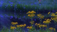 平池の初夏の水辺 7