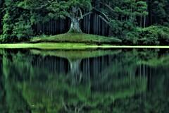 水鏡の千年杉 3