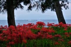 湖辺の彼岸花 3