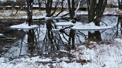 小さな森の水辺の冬物語 2