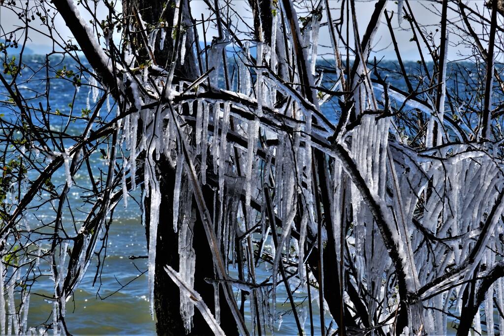しぶき樹氷 2