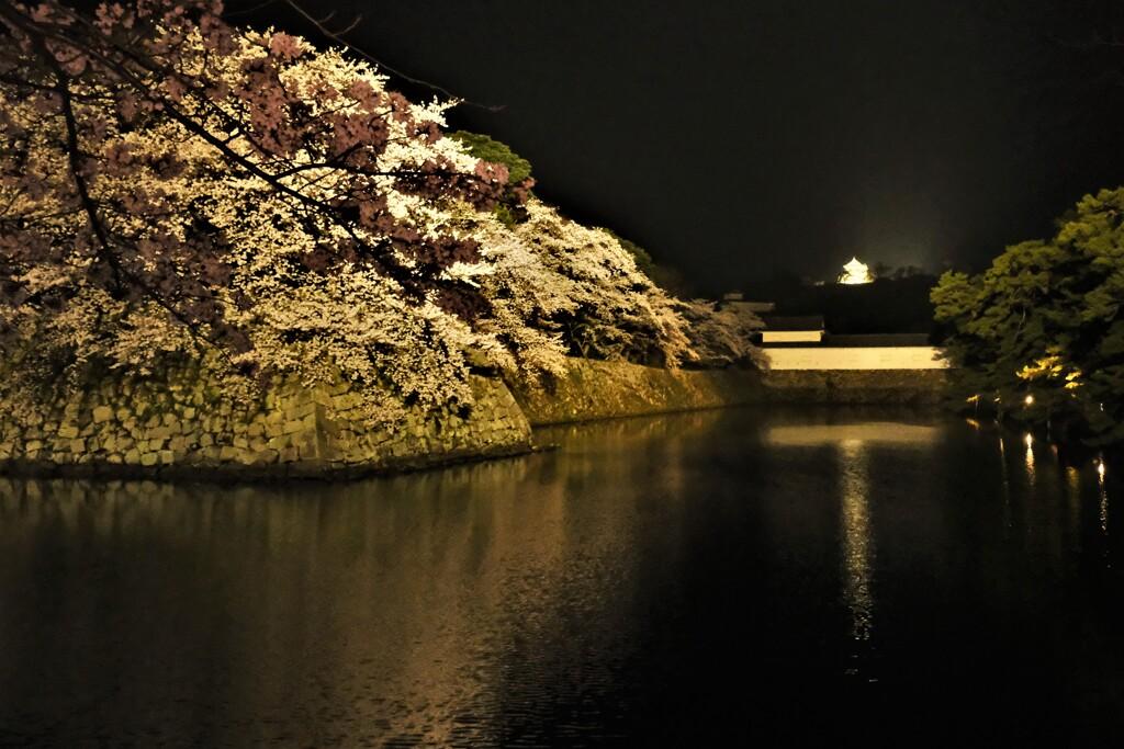 彦根城濠端夜景 2