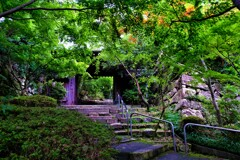 深緑の村雲御所瑞龍寺山門