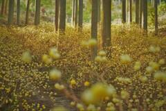 春薫妖精の森 11