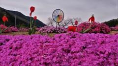 地上の春 5