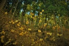 春薫妖精の森 3
