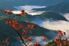 小入谷峠の朝景雲海 10
