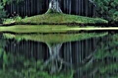 水鏡の千年杉 2