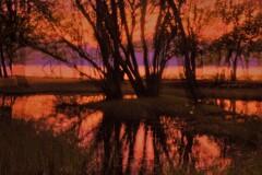 湖辺の小さな森の夕景 3