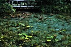 モネの池 7