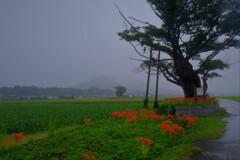秋雨飯盛木 2