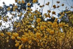 春薫妖精の森 6