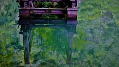 深緑のもみじ池 3-2