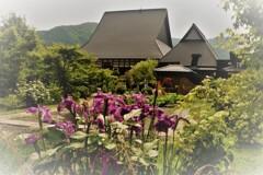 全長寺の菖蒲